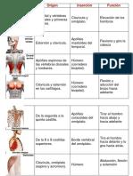Musculos-completo