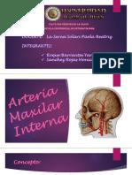 Arteria MAX INT