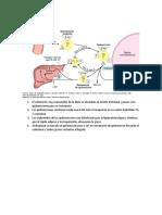 imagenes transporte de colesterol