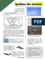 migrations.pdf