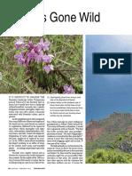 Orchids_gone_wild.pdf