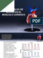 Potenciales de Acción del Musculo Cardíaco