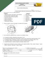 EV. Celula.docx