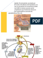 hormonas hipotalamo adenohipofisis