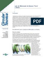 Maturação da banana da terra com etefon circular_71