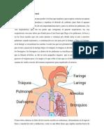 sistema respiratorio y renal..docx