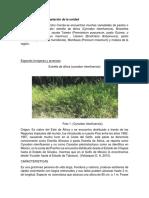 caracteristicas de pastos.docx