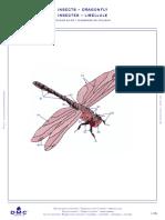 https___www.dmc.com_media_dmc_com_patterns_pdf_PAT0478_Insects_-_Dragonfly
