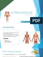 El Tono Muscular