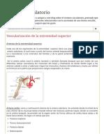 Sistema Circulatorio_ Vascularización de la extremidad superior