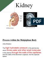 Bio Kidney Presentation