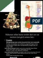 nutrisi dan pencernaan manusia.ppt