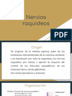 Nervios raquídeos.pdf