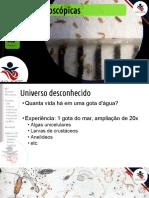 1em08escalasmicroscpicas2017-170612113400.pdf