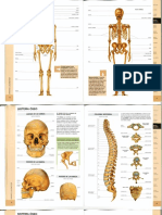 Atlas - Sistema óseo (color)