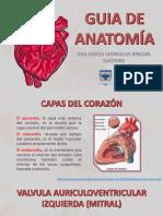 Guia de Anatomía