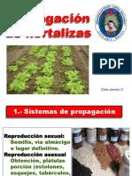 Diapo de hortalizas UTEQ