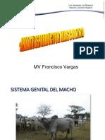 4. Anatomía y examen clìnico del aparato reproductor masculino