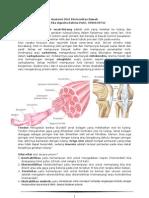 LTM Anatomi Otot Ekstremitas Bawah