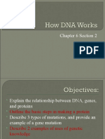 How DNA Works Ch 6.2 7th
