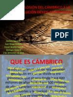 El Cambrico, La Radiacion en Artropodos y Artopodizacion