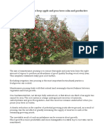 Maintenance pruning to keep apple and pear trees calm and productive