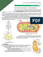 MEDRESUMOS 2014 - BIOQUÍMICA 07 - Cadeia respiratória