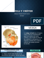 ureteryvejiga-151202153536-lva1-app6892