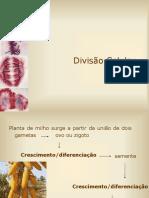 Divisão Celular I