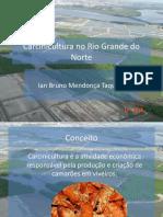 Carcinicultura No Rio Grande Do Norte