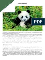 Osos Pandas.docx