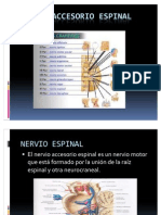 NERVIO_ACCESORIO_ESPINAL