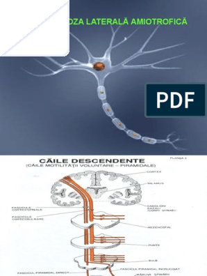 pierderea în greutate a bolii neuronului motor)