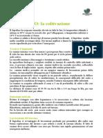 fagiolino1