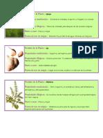 Algunas plantas