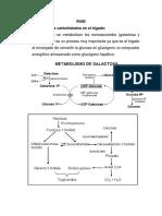 Absorción y transporte de carbohidratos al hígado