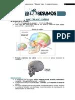 Anatomia do Crânio