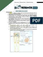 Anatomia da Coxa