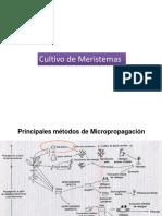 04 Cultivo de Meristemas01.pptx