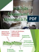 02_-_Saneamiento_de_Cultivos