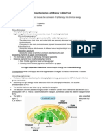 Outline for Photosynthesis