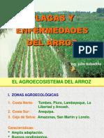 Arroz - Agroecosistema, plagas y recomendaciones