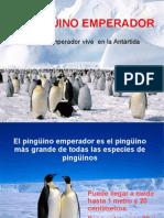 pp_pinguinoemperador