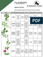 Tableau-plantes-sauvages-v.10