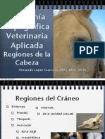 02_Regiones_de_la_cabeza.pdf
