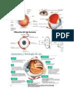 Anatomía del Ojo.docx