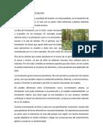 forestacion