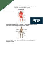 Sistema Muscula1