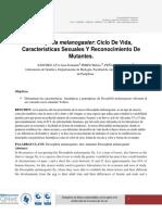 Drosophila melanogaster  MELIZA