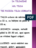 genul Tilia.pptx